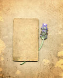 Antiker Lavendel Lizenzfreie Stockfotos