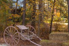 Antiker Pferdewarenkorb im Wald lizenzfreies stockbild
