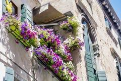 Antikes Gebäude mit Terrasse mit blühender Petunie des Rosas blüht in Venezia Lizenzfreie Stockfotos