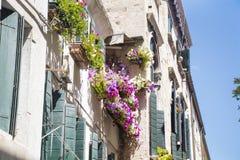 Antikes Gebäude mit Terrasse mit blühender Petunie des Rosas blüht in Venezia Stockfotografie