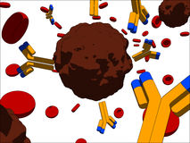 antikroppcancercell Royaltyfria Bilder
