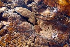 Antikt trä Arkivfoton