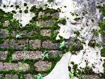 Antikviteten fördärvar väggen med mossa på lateritestentextur royaltyfri fotografi