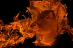 Antilop i den dubbla exponeringen för brand arkivbild