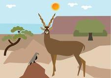 Antilope Images libres de droits