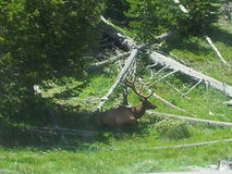 antilope Lizenzfreie Stockfotos