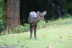 antilope Photographie stock