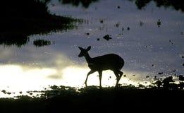 Antilope ad un waterhole africano immagine stock