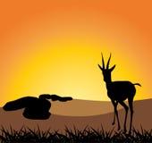 Antilope auf einem Hintergrund des Sonnenuntergangs Stockbilder