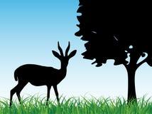 Antilope dans l'herbe Image libre de droits
