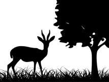 Antilope dans l'herbe Photographie stock