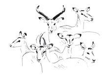 Antilope de croquis de main Photo libre de droits