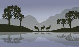 Antilope in riverbanklandschap Royalty-vrije Stock Foto