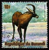Antilope rouane (equinus de Hippotragus), animaux Burundi, cercle de série Photo libre de droits