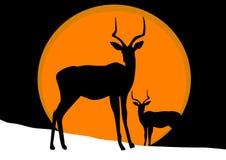 Antilope sur la neige Photographie stock