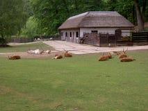 Antilope, Wüstenkuh, IBIS und Strauß zusammen in einem Platz, Zoo Lesna, Zlin, Tschechische Republik stockbilder