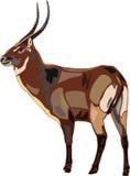Antilopen-Serie waterbuck. Stockfotografie
