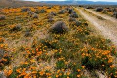 Antilopen-Tal Poppy Preserve Lizenzfreies Stockbild