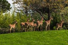 Antilopes à Turin photos stock