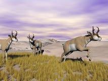 Antilopes de Pronghorn dans le sauvage - 3D rendent Images libres de droits