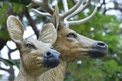 Antilopstaty Fotografering för Bildbyråer