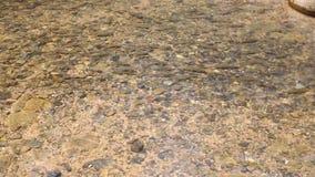 Antimonfisk i den Khlong Plakang vattenfallet arkivfilmer