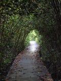 Antion namorzynowy park Obrazy Stock