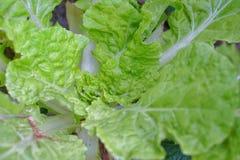 antioxidant Fotografia de Stock Royalty Free