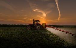 Antiparassitari di spruzzatura del trattore sul campo di verdure con lo spruzzatore alla s Fotografia Stock