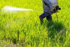 Antiparassitario di spruzzatura dell'agricoltore nel giacimento del riso Fotografie Stock Libere da Diritti