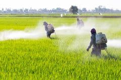 Antiparassitario di spruzzatura dell'agricoltore nel giacimento del riso Fotografia Stock