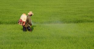 Antiparassitario di spruzzatura dell'agricoltore sul giacimento del riso Fotografie Stock Libere da Diritti