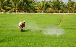 Antiparassitario di spruzzatura dell'agricoltore sul giacimento del riso Fotografia Stock