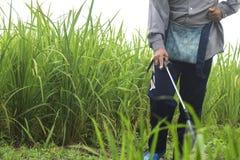 Antiparassitario di spruzzatura dell'erbaccia Blurred nell'agricoltura e nell'organo crescente Fotografie Stock