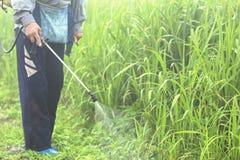 Antiparassitario di spruzzatura dell'erbaccia Blurred nell'agricoltura ed antiparassitario di spruzzatura organBlurred crescente  Immagine Stock Libera da Diritti