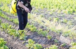 Antiparassitario di spruzzatura delle foglie delle patate Immagine Stock Libera da Diritti