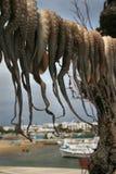 Antiparos - het drogen Octapus in de zon Stock Foto