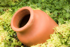 Antique Amphora in the garden Stock Photos