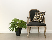 Antique armchair and plant near wall Royalty Free Stock Images
