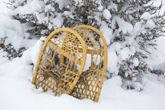 Antique bear Paw snowshoes juniper tree snow Stock Photos
