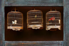 Antique bird cages. Vintage bird cages with stuffed birds inside on display Stock Photos