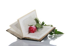 Antique book with rose. An antique book opened with a red rose laying inside Royalty Free Stock Photos