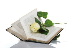 Antique book with white rose. An antique book opened with a white rose laying inside royalty free stock photography