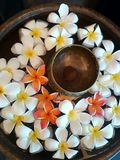 The Antique bowl. Thailand Antique bowl with colors of flowers Royalty Free Stock Photography