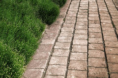 Antique Brick Pavers Alley with Green Plant Hedge Royalty Free Stock Photo