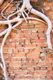 Antique brick wall with dry root Royalty Free Stock Photos