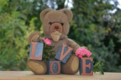 Antique brown teddy bear and a white bear sitting with Love stones and pink roses Stock Photos