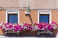 Antique  building with windows with pink blooming petunia flowers  in Venezia Royalty Free Stock Photography