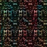 Antique Butterfly botanical Illustration background design Stock Photography