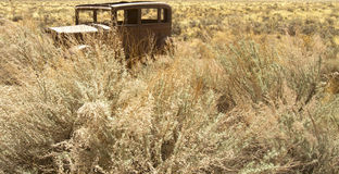 Antique Car in Grasses Stock Photos